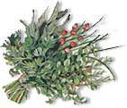 HerbolariaSylvia-ramo